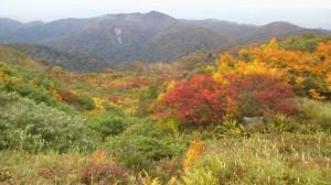 清川小屋近くの紅葉