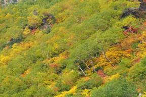 黄葉。紅葉。