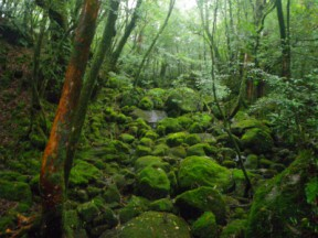 もののけ姫をイメージしたという苔の森