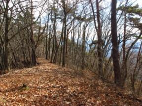 縦走路は落ち葉の道