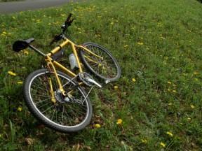 黄色の自転車には黄色い花。日本タンポポでした。