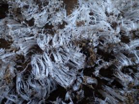 朝、霜が降りてました.あー寒い
