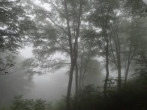 巨木の森②