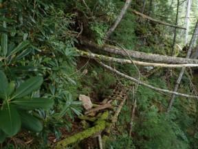 崩壊しているトラバースの橋