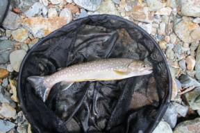 何匹か釣る中でよいサイズも出た