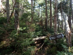 原生林のなかの踏み跡