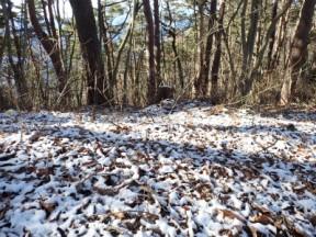 白と色彩がきれいな初冬の山
